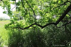 Mönchbruch 2019 099 (60386pixel) Tags: mönchbruch naturschutzgebietmönchbruch naturschutzgebiet natur hessen sommer