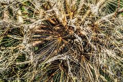 Mönchbruch 2019 094 (60386pixel) Tags: mönchbruch naturschutzgebietmönchbruch naturschutzgebiet natur hessen sommer