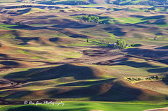 The Palouse Waves (PhotoDG) Tags: landscape palouse wave hill pattern washington color wheat farm farming steptoebuttestatepark steptoebutte statepark steptoe telephoto ef70200mmf4lisusm whitmancounty