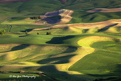 The Palouse Waves (PhotoDG) Tags: whitmancounty washington steptoe butte steptoebutte statepark landscape color pattern wheat field farm farming texture steptoebuttestatepark