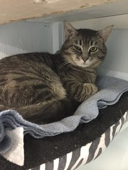 Elmer - 2 year old neutered male