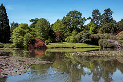 Sheffield Park (Paulie-W) Tags: lake trees reflections lillypads waterlillys ducks summer