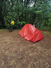 Konan Tent (Bracus Triticum) Tags: konan tent kōchiprefecture 高知県 shikoku 四国 日本 japan 4月 四月 卯月 shigatsu uzuki unohanamonth 2019 平成31年 spring april