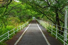 Aki Town Bicycle Path (Bracus Triticum) Tags: aki town bicycle path kōchiprefecture 高知県 shikoku 四国 日本 japan 4月 四月 卯月 shigatsu uzuki unohanamonth 2019 平成31年 spring april