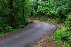 Konan Park Road (Bracus Triticum) Tags: konan park road kōchiprefecture 高知県 shikoku 四国 日本 japan 4月 四月 卯月 shigatsu uzuki unohanamonth 2019 平成31年 spring april