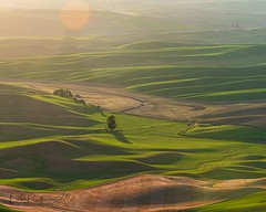 The last rays of the sun. (Linda JP) Tags: steptoebutte steptoe fields washington rollinghills thepalouse palouse tuscanyofamerica