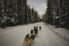 Ride with lovely huskies (motorized cart) (vagnerrosmann) Tags: