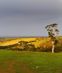 Macclesfield, Adelaide Hills - South Australia (Trace Connolly Photography) Tags: australia natur natura natural nature naturaleza naturephotography colour color colourful outdoor outdoors outside eos canon sunlight exposure flickr landscape earth environment environmental environmentalphotography sunset sunrise contrast red green yellow blue black white scene scenery cloud clouds sky scenic weather holiday view country countryside orange purple pink macclesfield hills tree trees grass shadow shadows leaf rain leaves