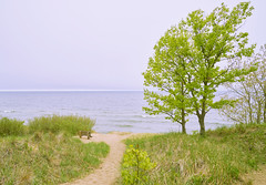 023755a A Bench For Lovers And Daydreamers (David G. Hoffman) Tags: lake lakeshore lakemichigan path beach beachgrass bench