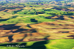 The Palouse Waves (PhotoDG) Tags: palouse wheat field farm landscape farming pattern color hill wave washington statepark steptoebutte steptoe whitemancounty telephoto ef70200mmf4lisusm columbiabasin