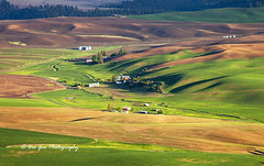The Palouse Waves (PhotoDG) Tags: wave palouse hill wheat field farm farming washington pattern color telephoto landscape steptoe steptoebutte steptoebuttestatepark statepark whitemancounty