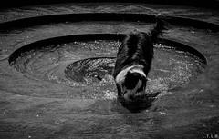 "Chapultepec-2 (""Warhol"") (LTL78) Tags: cdmx chapultepec méxico dog perro fuente agua samsung nx1"