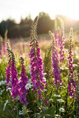 Spring (Clint Dunn) Tags: leicasl sonnar zm nature csonnart1550 zeiss