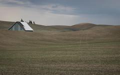 The Road Goes on a Pace (fotostevia) Tags: wheat oldbuildings wheatfields palouse palousehills