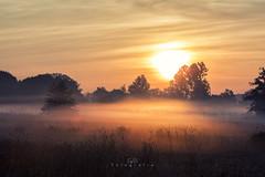 Sonnenaufgang am Niederrhein (EmPi Fotografie) Tags: sonnenaufgang niederrhein nrw deutschland hamminkeln empifotografie fotografie natur sonne nebel morgens lichtstimmung licht warm sommer