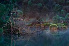 Mystic Calm at Lake Lopez (Jos Buurmans) Tags: hastings havelocknorth hawkesbay lake lakelopez landscape nature newzealand northisland waimaramaroad nz