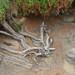 Driftwood in a Garden