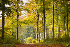 Autumn forest, Kell am See (Germany) (werner.marx.kell) Tags: kellamsee forest autumn autumnforest sigmadp3m foveon
