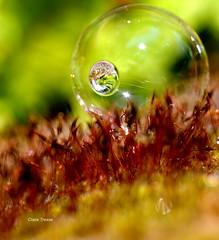 Le Monde des Lilliputiens (clairetresse) Tags: macro mousse herbes bulle drop soap grass pentaxk5