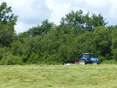 Cagnotte, Landes: le tracteur fauche et 17 cigognes le suivent (Marie-Hélène Cingal) Tags: cagnotte landes 40 paysdorthe aquitaine nouvelleaquitaine sudouest france cigognes storks