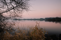 Dusk at Kinnegoe Marina (Stephen_Lavery) Tags: branch calm dusk freshwater horizon lake lough serene silhouette still sunset tree twig water nature natural environment landscape reflection mirrored outdoors nopeople backgrounds bough treetrunk tranquillity