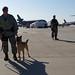 Military Police Working Dog