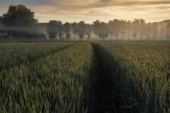 misty morning (Sebo23) Tags: landschaftsaufnahme landschaft landscape landscapephotography naturaufnahme natur nature morgenstimmung morgennebel morninglight morning canoneosr canon16354l