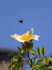 Flower. (giuselogra) Tags: nature naturepics natura flora flowers flower colori colors impollinazione piedmont piemonte italy italia