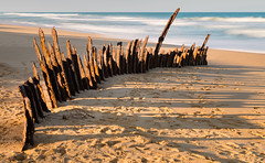 The Trinculo shipwreck (laurie.g.w) Tags: the trinculo shipwreck 90milebeach eastgippsland victoria sand beach ocean shoreline coastline waterscape rust australia