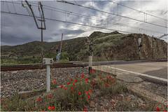 Paso a nivel con barrera y ababoles (Fernando Forniés Gracia) Tags: españa aragón zaragoza hocesdeljalón paso nivel flores paisaje landscape naturaleza
