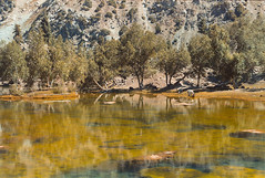 Reflection at Satrangi Lake in Naltar (Sherazdionysus) Tags: filmphotography 35mmphotography pentaxk1000 fujicast605n lomography lake wildlife landscape valley naltar filmisnotdead