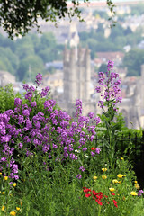 Flowers and Bath Abbey (smir_001) Tags: beechencliff alexandrapark britishparks parks gardens city cathedral bath abbey bathabbey landscape cityscape views rooftops panorama britishgardens canoneos6dmarkii summer june churches somerset bathnes avon bath2019 tourism history roman historical architecture georgianarchitecture england british uk flowers colourful purple red wildflowers