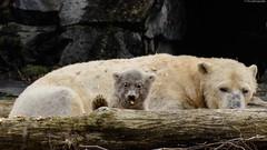 ©DSC_7086 (Nikonfan-Fotografie) Tags: berlin tierpark tierparkberlin friedrichsfelde lichtenberg deutschland germany