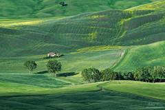 Greens of Tuscany (Johan Konz) Tags: green hill tuscany citywall pienza italy farmhouse tree field rural road landscape outdoor ruralscene travel nikon d7500 spring springtime monochrome elitegalleryaoi bestcapturesaoi