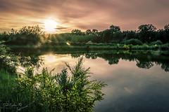 sundown (Geert E) Tags: dendiel mol vijver zonsondergang sunset water pond pool étang brem genêt broom