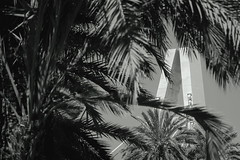 Concrete Giant (TheTomL3) Tags: bridge puente pont palmtree palmera palmier elche elx españa espagne spain europa europe canon eos 600d canoneos600d teamcanon city urban ville bw blackandwhite noiretblanc bn blancoynegro nb