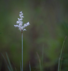 Pollen (tshabazzphotography) Tags: bloom nature naturephotography naturecomposition trail hiking outdoors explore depthoffield pollen canon canonphotography wild mothernature beauty openyoureyes art summer 2019 white green vegetation life