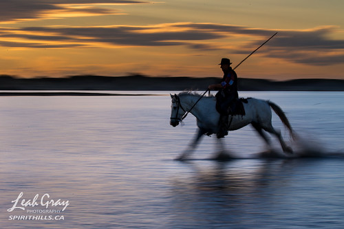 """Gardian of the Camargue • <a style=""""font-size:0.8em;"""" href=""""http://www.flickr.com/photos/106269596@N05/47986131096/"""" target=""""_blank"""">View on Flickr</a>"""