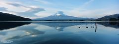 在水一方 ([M!chael]) Tags: hasselblad xpan 3056 fujifilm provia 100f rdpiii film manual rf rangefinder japan fujimt 河口湖 kawaguchiko かわぐちこ 富士山 山梨 fujiyama lake water panorama slide