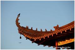 The Bird On Roof Top Of Temple - Lingyen Temple XT7042e (Harris Hui (in search of light)) Tags: harrishui fujixt1 digitalmirrorlesscamera fuji fujifilm vancouver richmond bc canada vancouverdslrshooter mirrorless fujixambassador xt1 fujixcamera fujixseries fujix fujixf50140mmf28 fujizoomlens bird temple rooftop pilgrimage buddha wisdom biddhistwisdom