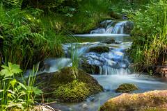 2__.jpg (Nu Mero) Tags: cpl nature poselongue riviere etang fleuve lac grandfontaine basrhin france