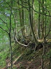 (Landanna) Tags: nørreskoven als sønderjylland zuidjutland denmark denemarken danmark dänemark nature natur natuur bos skov forest