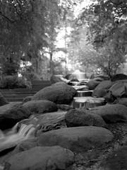 Little Stream (ucn) Tags: zeissikondonata2277u tessar135cmf45 volksparkfriedrichshain friedrichshain berlin adoxchs100ii y44filter