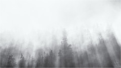 Dissolving the Fog... (Ody on the mount) Tags: anlässe bäume licht lichteinfall lichtstrahlen nebel omd olympus pflanzen rahmen schwarzwald wald wanderung bw blackforest blackandwhite fog frame light monochrome sw schwarzweis gernsbach badenwürttemberg deutschland