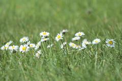 144 Morning in the garden (Conanetta) Tags: