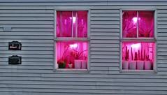 Voir la vie... (Robert Saucier) Tags: montréal montreal fenêtre window vitrine vitre glass cristal rose pink lumière light gris grey img6478