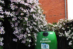 Abundance (erlingraahede) Tags: clematis abundance flowers canon holstebro vsco denmark urban