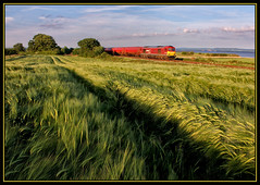 BARLEY IN THE BREEZE (OLD GIT WITH A CAMERA) Tags: