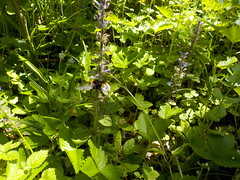 DSCN1015 (Rumskedi) Tags: belgië belgique belgien tervuren arbotetum zoniënwoud flore aardbeien fraises hommel