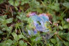 DSC_0779 (griecocathy) Tags: macro bulle trèfle reflet vert violet bleu marron blanc rose transparence
